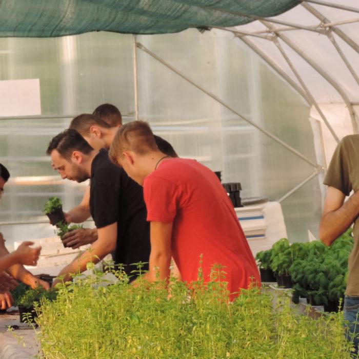 Social enterprises key for European Green Deal