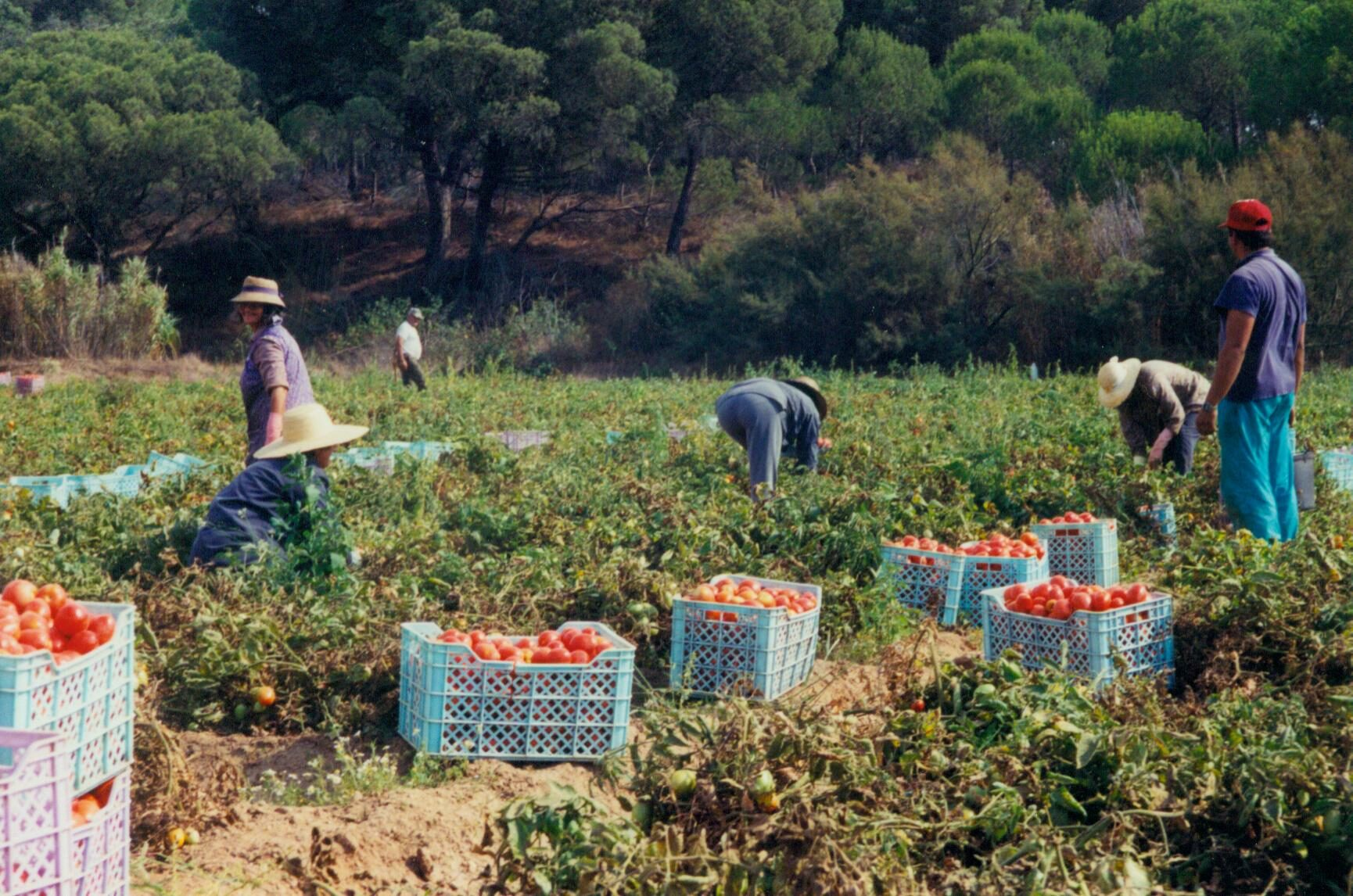 Undocumented workers are 'elephant in room'