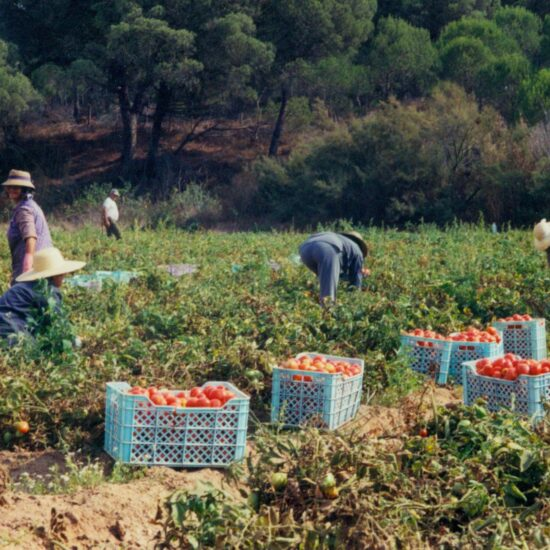 Call to respect labour rights in agriculture